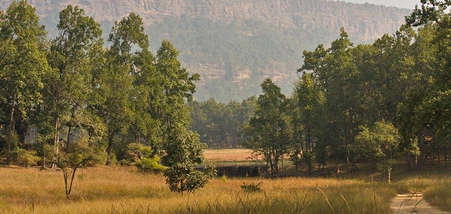 Bandhavgarh national park - National Parks in India