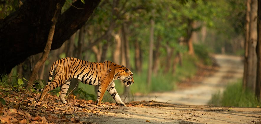 Dudhwa National Park - National Parks in India