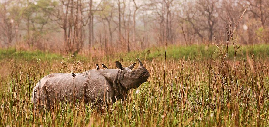 Orang National Park - National Parks of India