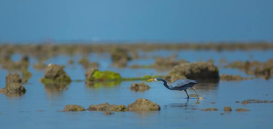 Gulf of Kutch Marine National Park