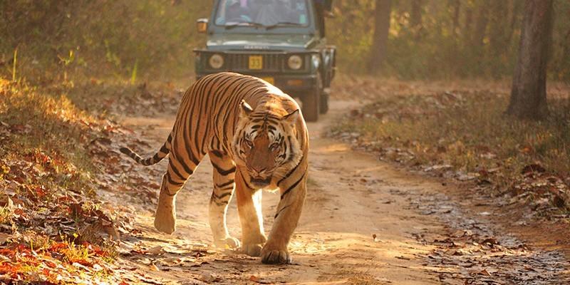 Best Wildlife tours in India - Jim Corbett National Park