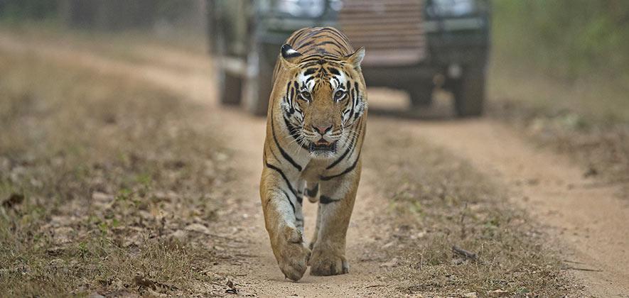 Ranthambore National Park safari - National Parks in India
