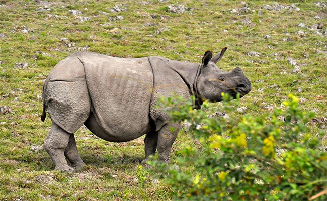 Kaziranga National Park Assam - Top National Parks in India