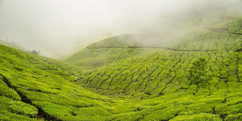 Best honeymoon places in India - Munnar, Kerala