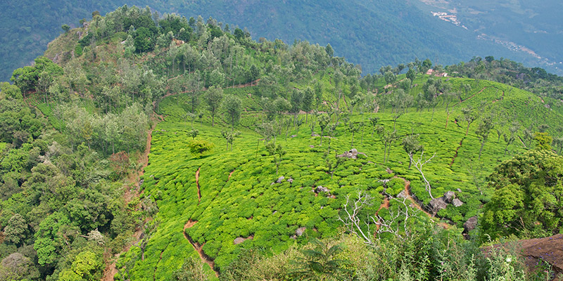 Best honeymoon places in India - Coonoor