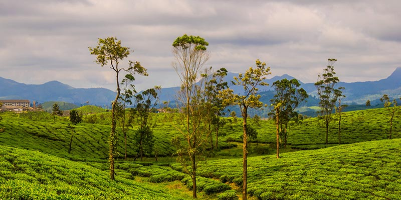 Valparai - Hill Stations near Bangalore