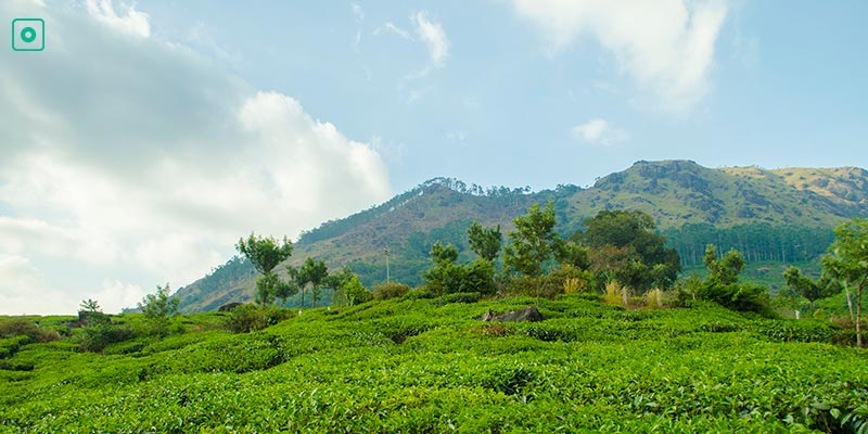 Munnar - Hill Stations near Bangalore