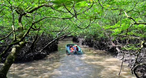 Andaman-island-baratang-mangrooves