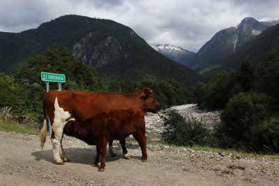 Travel blog image for March 14, 2014 in Puyuhuapi, Chile