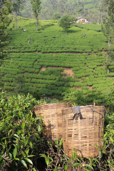 Travel blog image for Jan. 10, 2015 in Nuwara Eliya, Sri Lanka