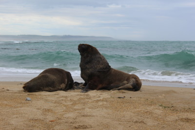Travel blog image for Jan. 23, 2016 in Waipapa Point, Otago