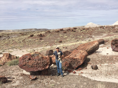 Travel blog image for April 7, 2016 in Petrified Forest National Park, AZ