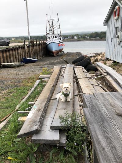 Travel blog image for Sept. 18, 2018 in Annapolis Royal, Nova Scotia