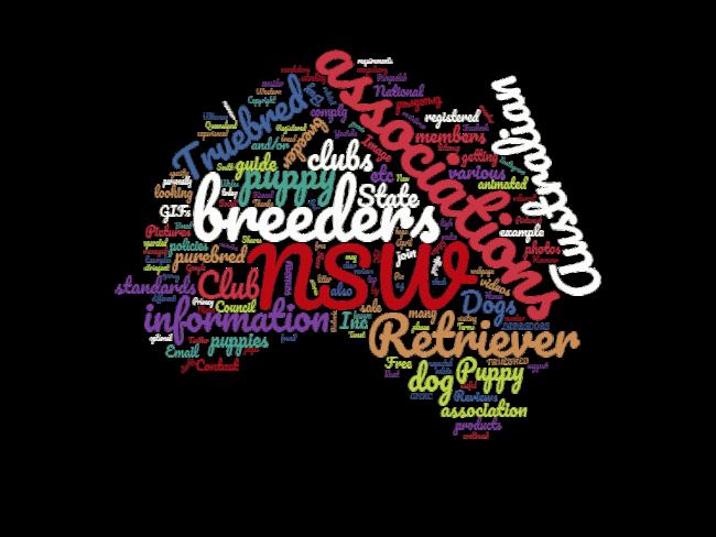 australian labrador breeders associations