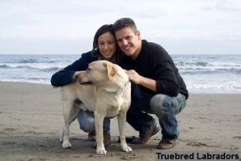 happy couple at beach with labrador retriever