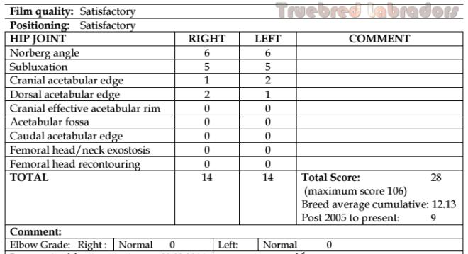 labrador hip score example