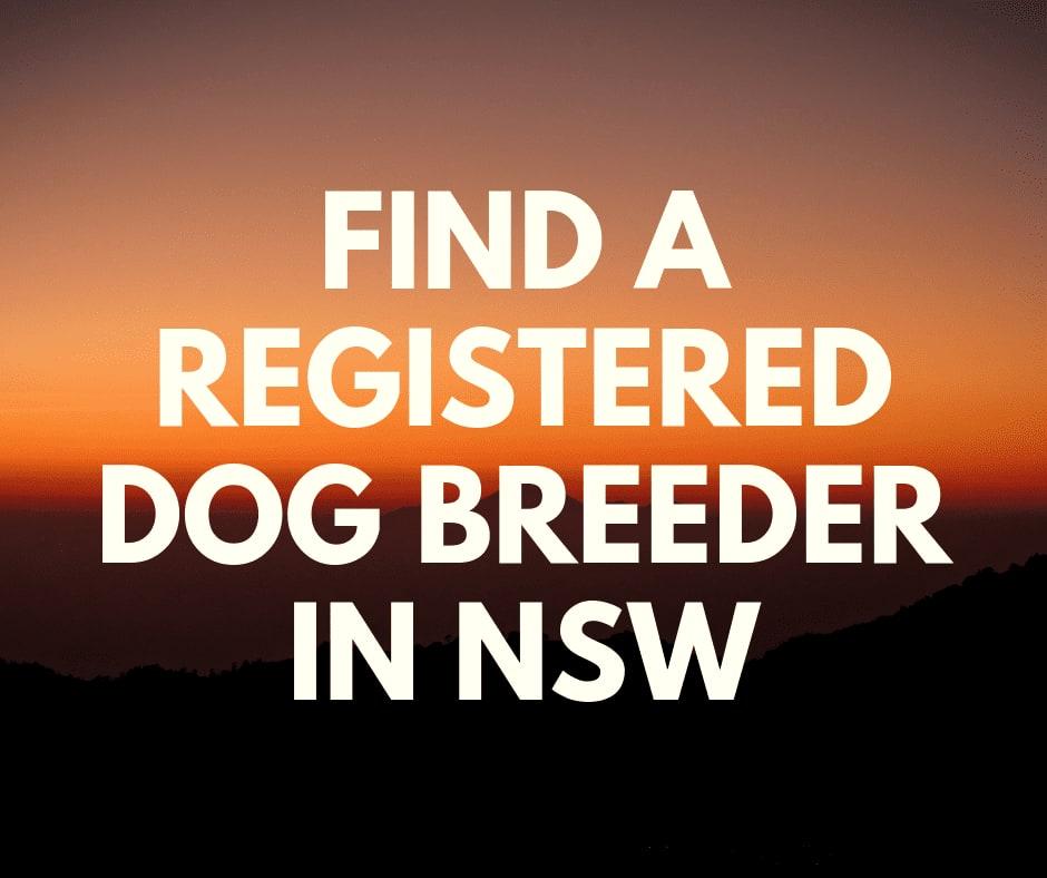 How to find Registered Dog Breeders Australia