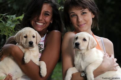 two smiling girls with yellow labrador puppies