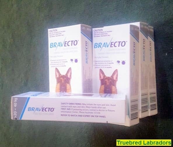 Bravecto for fleas and ticks