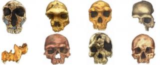 人脸的演化历程