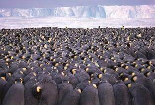 与企鹅共舞:一名摄影师和一万南极帝企鹅相伴的时光