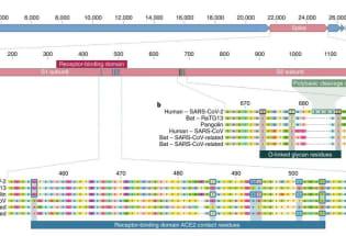 为何说新冠病毒的实验室起源论是不足信的?