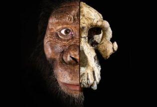 人类始祖:哪一种猿类是我们的祖先,答案越来越复杂