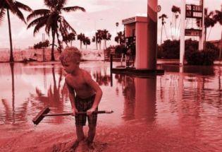 气候变化:哪些地球上的物种能逃过劫难