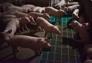中国猪肉短缺酿成全国性危机