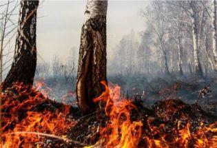 闷烧中的北极:人类要如何面对环境浩劫