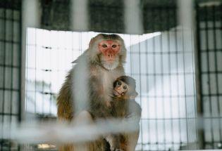 """新冠疫苗研发背后的中美""""战略猴子储备""""竞赛"""
