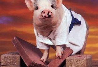 记忆、意义和自我:人和猪的区别就这些吗?