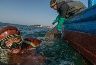 中国人对海参的无穷胃口导致物种危机