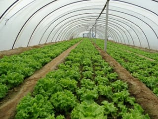 中国科学家发现农作物能吸收微塑料
