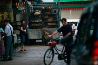 访谈:中国玉林狗肉节和吃狗肉引发的冲突