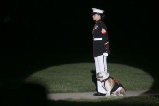 美国历史之:海军陆战队吉祥物