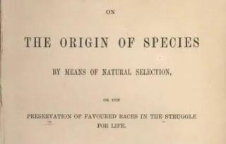 达尔文之过:人类真的和其他生物平等吗?