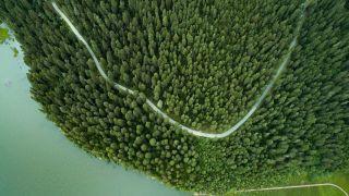 """气候变化:中国植树造林的碳吸收作用""""被低估了"""""""