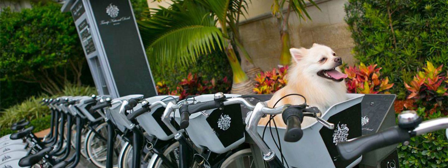 Doral Bikes with a Dog