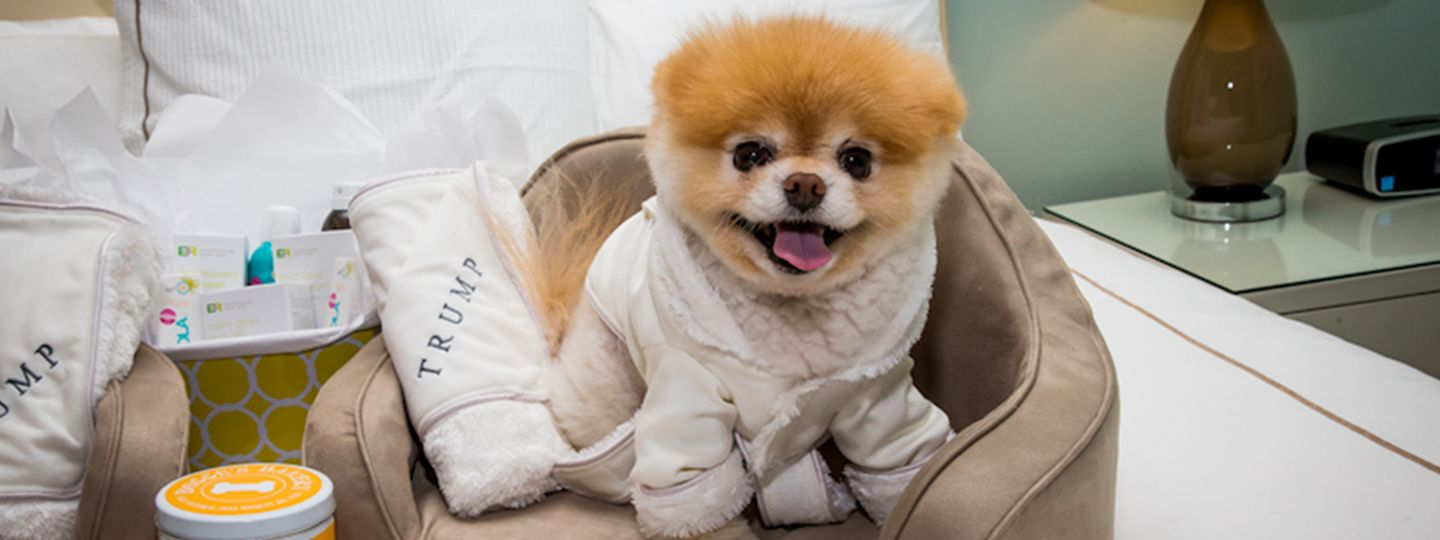 Dog with a Trump Robe