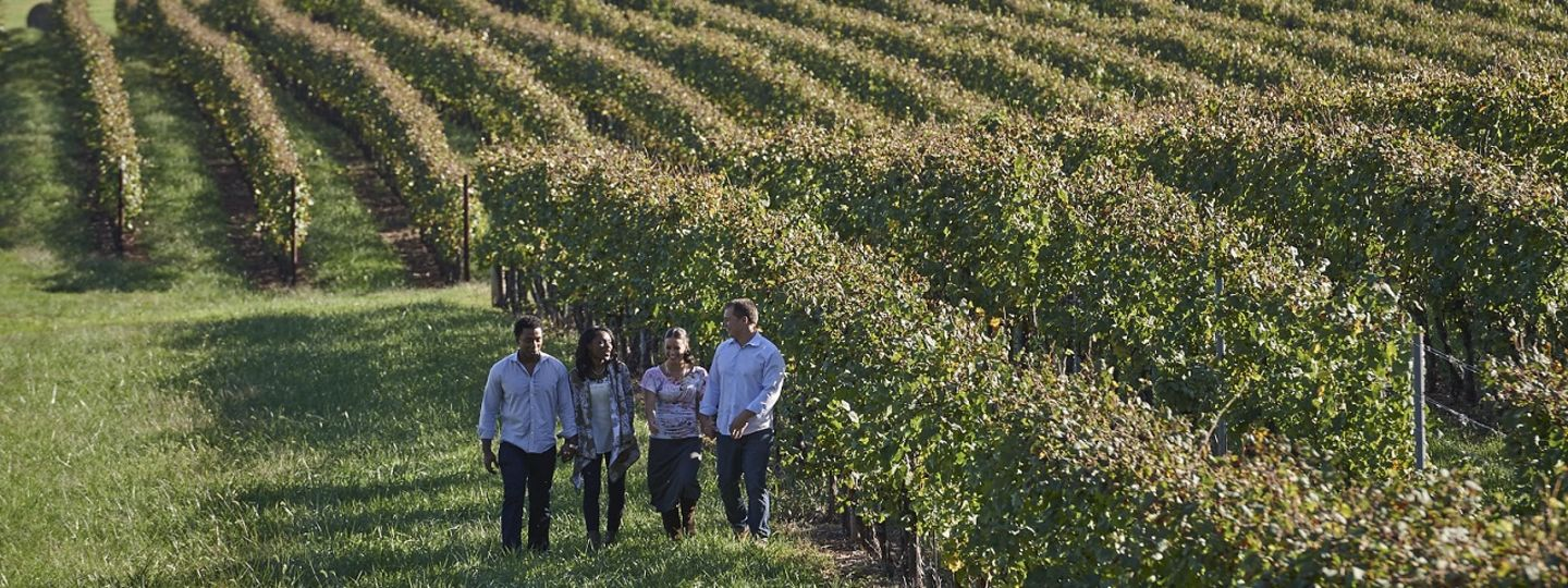 Trump Winery Walk Through Vineyard