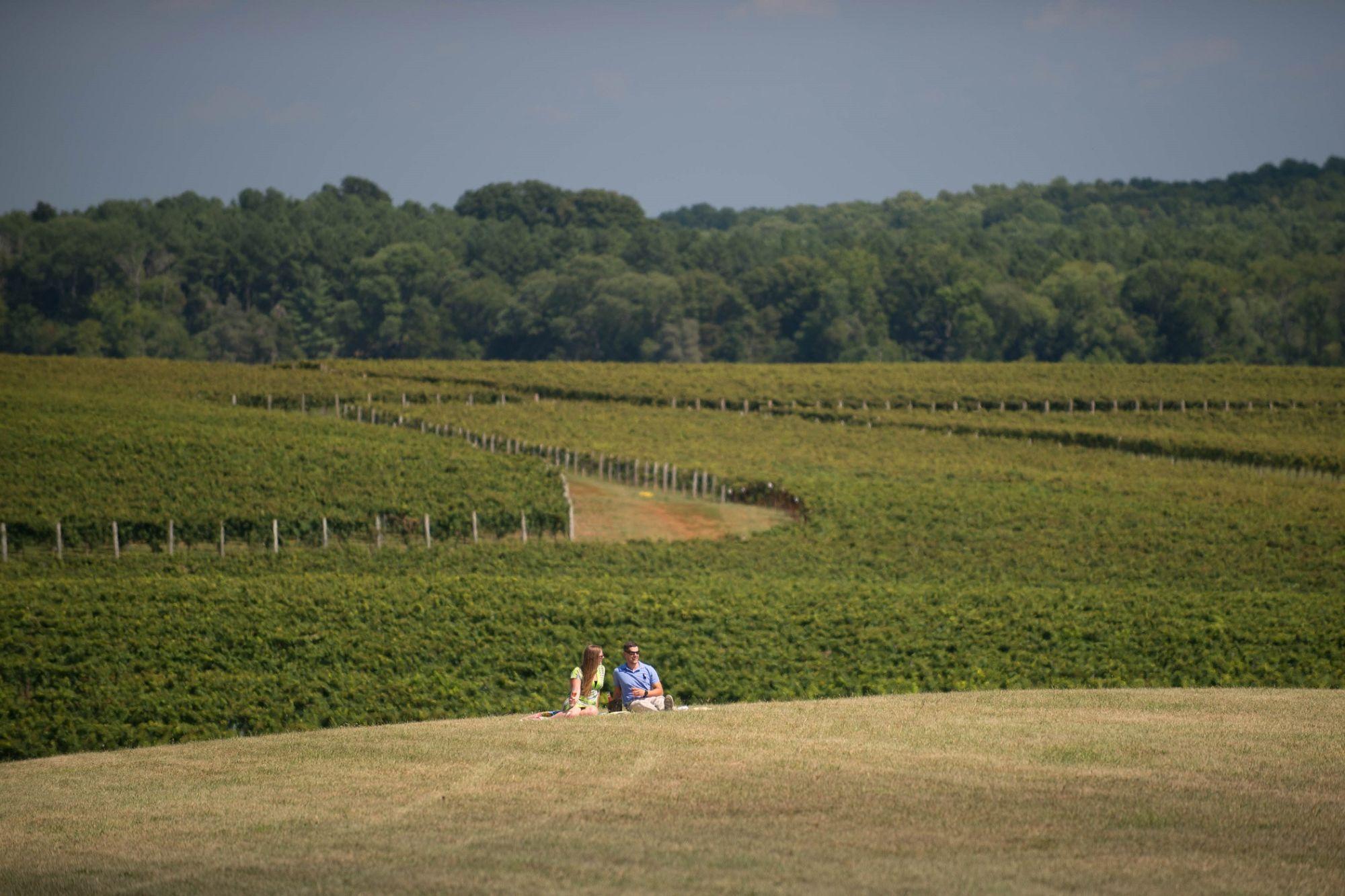 Trump Winery Vineyard