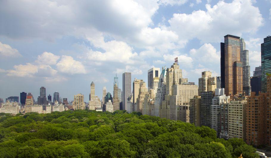 Central Park Trees & Skyline