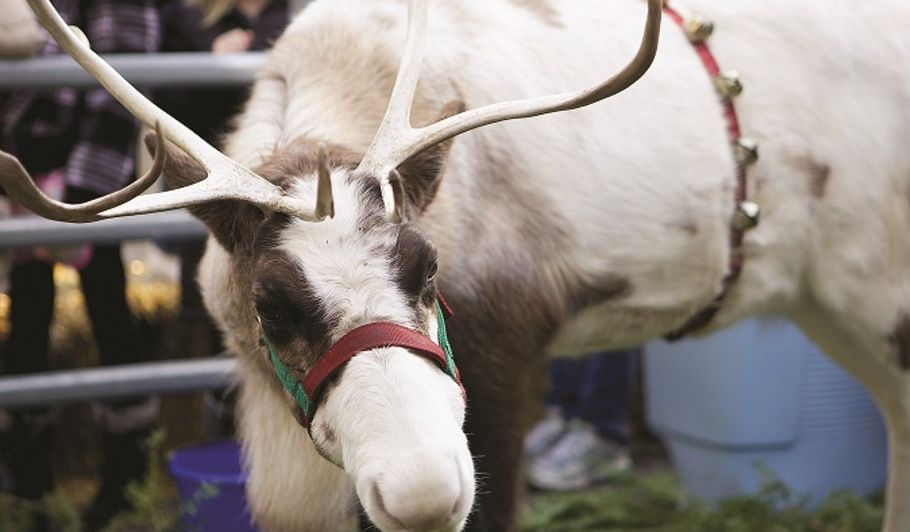 Event - Reindeer on the River