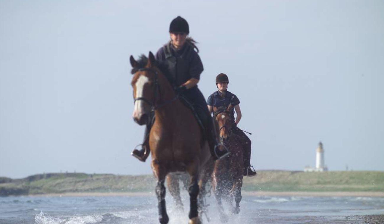 Horseback Riding Along the Beach