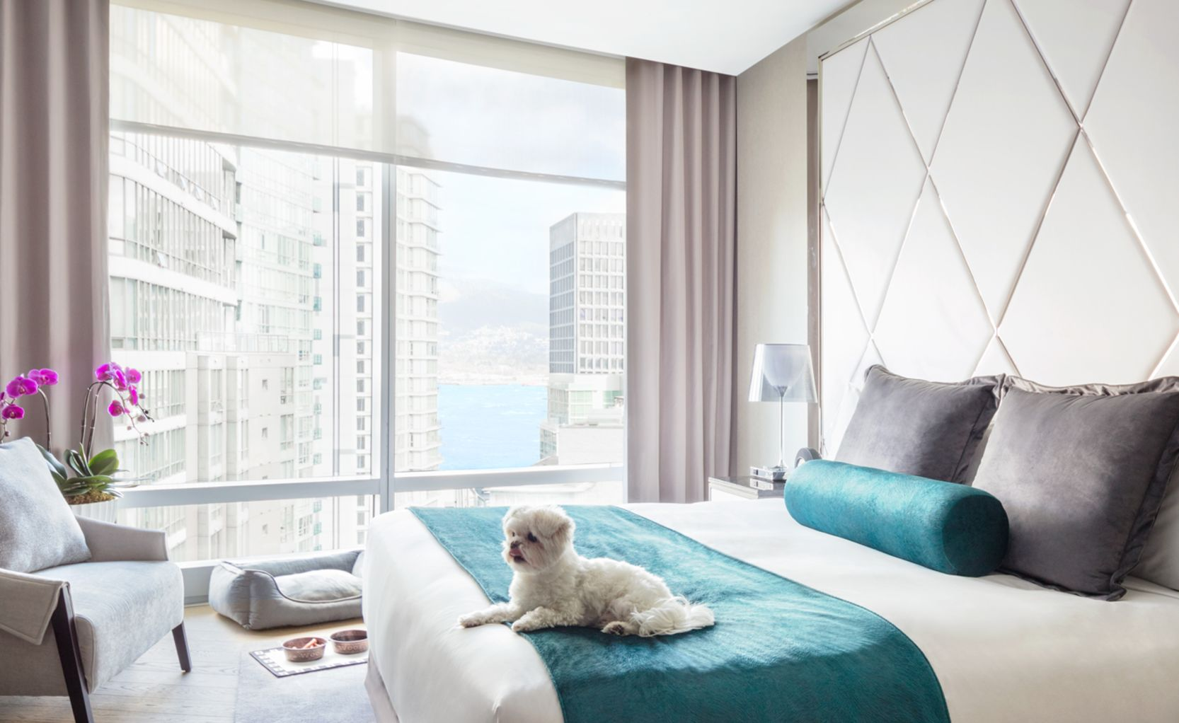 hotel interior with dog on bed, water and food bowl