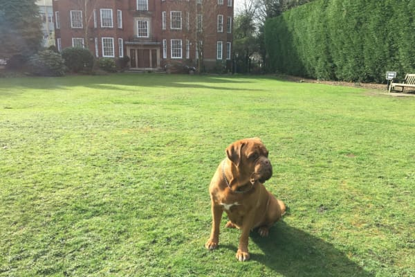House and Pet Sitting in the United Kingdom
