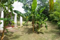 House sit in Playa Hermosa, Costa Rica