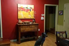 House sit in Eugene, OR, US