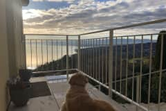 House sit in Grandvaux, Switzerland